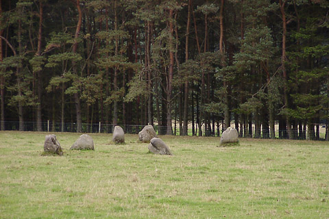 Fortingall E  Stone Circle, Perth and Kinross